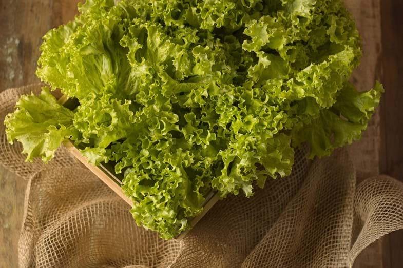 ALFACE - Coma à vontade , pois uma folha grande de alface tem apenas 3 calorias