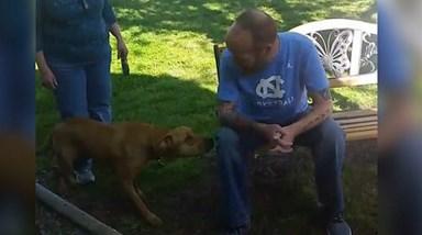 Cão confuso com dono que emagreceu 22 quilos