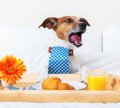 8 hotéis para onde pode levar o seu cão