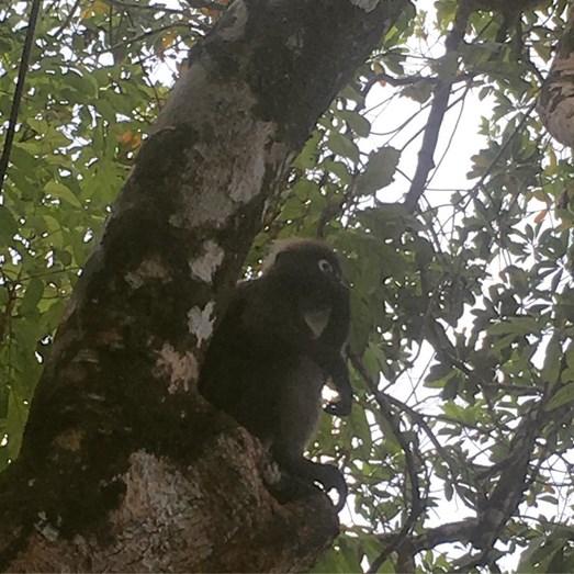 Os macacos foram os melhores amigos de Cristina e do filho, durante a estadia no resort