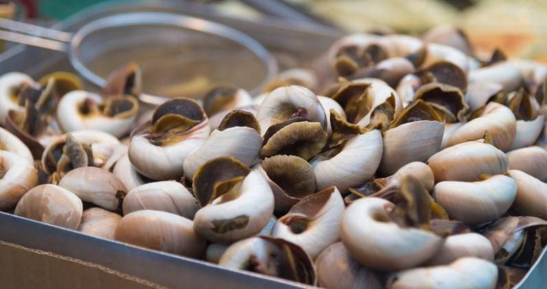 Os melhores spots para comer caracóis