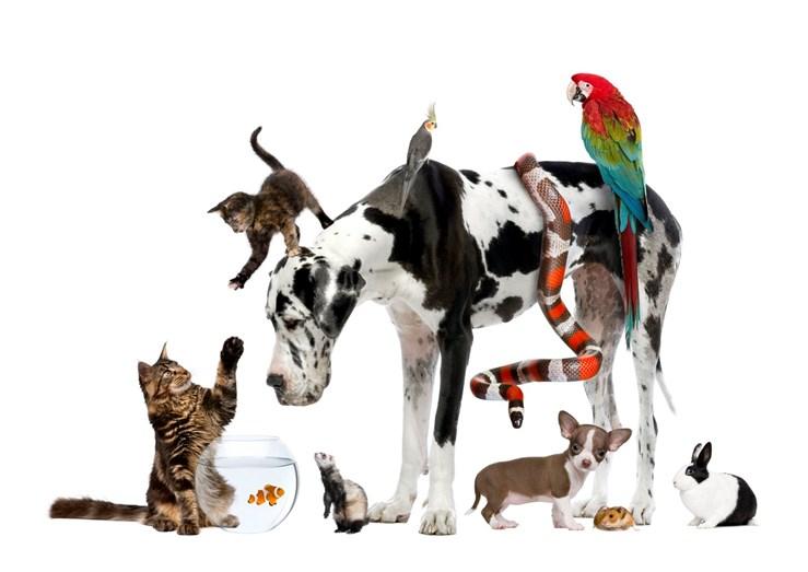 Estes são os melhores animais de estimação - Familia - FLASH!